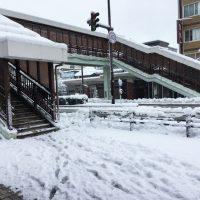雪・雪・雪・・・そして雪。